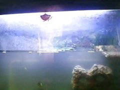 my pet turtle video